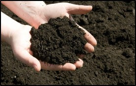 Soil enrichment with biofertilisers