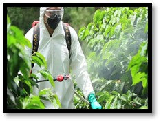 Sparying pesticides