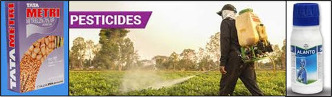 Spraying of Insecticides and herbicides to control sucking insects and weeds to prevent Bacterial speck on tomato