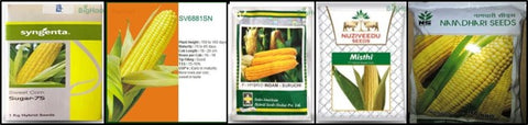 Sweet corn seed varieties