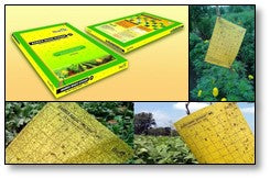 Yellow sticky traps for white fly control