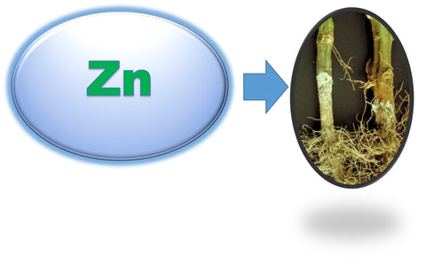 Zinc nutrient and plant disease