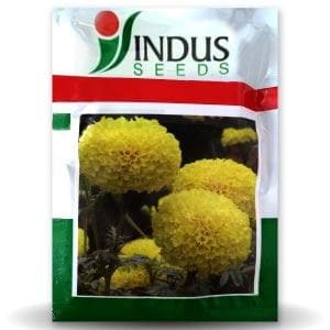 BENZ TALL MARIGOLD - BigHaat.com