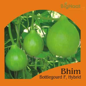 BHIM BOTTLE GOURD (BULB SHAPED) (भीम लौकी ) - BigHaat.com