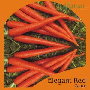ELEGANT RED CARROT (OP) - BigHaat.com