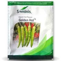 GOLDEN HOT CHILLI - BigHaat.com