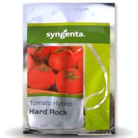 HARD ROCK (TO-8011) TOMATO - BigHaat.com