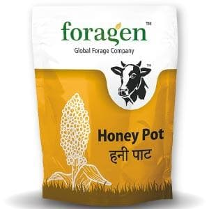 HONEY POT (BMR SWEET SORGHUM) FORAGE
