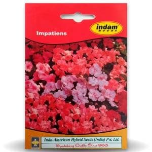 HYBRID IMPATIENS FLOWER - BigHaat.com