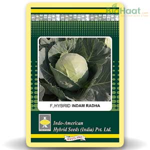 CABBAGE - BigHaat.com