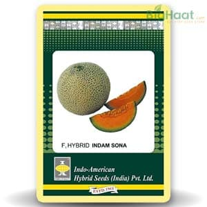 MUSK MELON - BigHaat.com
