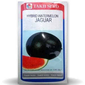 JAGUAR WATERMELON F1 - BigHaat.com