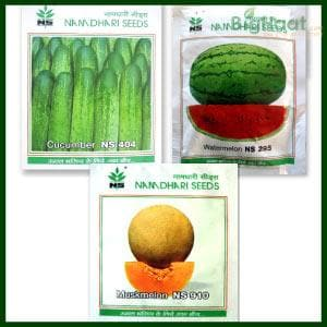 Kitchen Garden Seeds Combo -Cucumber, Watermelon and Muskmelon - BigHaat.com