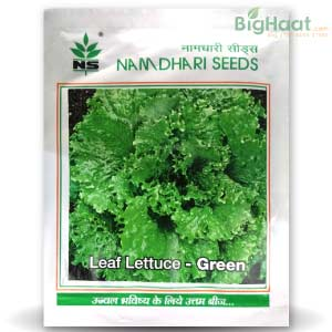 NS 1454 LEAF LETTUCE RED - BigHaat.com