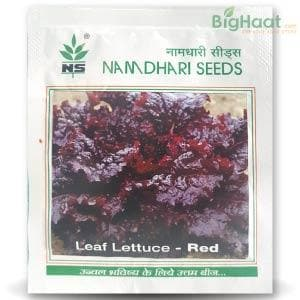 NS 10353 LEAF LETTUCE RED - BigHaat.com
