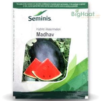 MADHAV WATERMELON - BigHaat.com