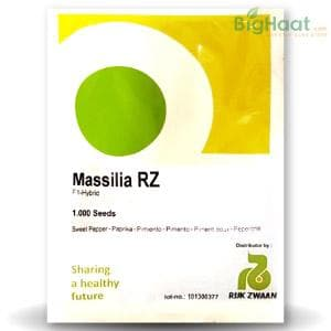 MASSILIA RZ F1 RED CAPSICUM