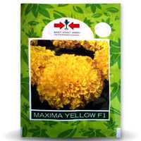 MAXIMA YELLOW MARIGOLD - BigHaat.com