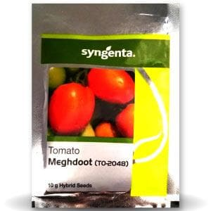TO-2048 (MEGHDOOT) TOMATO
