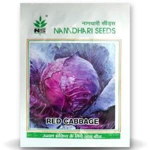 CHINESE CABBAGE RED - BigHaat.com