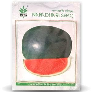 NS 252 WATERMELON