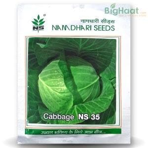 NS 35 CABBAGE
