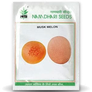 NS 7455 F1 MUSKMELON