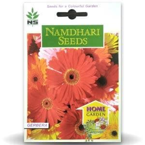 NS GERBERA SIN FLO HYB MIX - BigHaat.com