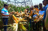 PAC751 CORN - BigHaat.com