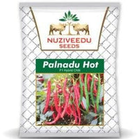 PALNADU HOT CHILLI - BigHaat.com