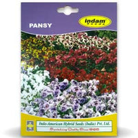 PANSY FLOWER - BigHaat.com