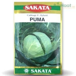 PUMA CABBAGE - BigHaat.com