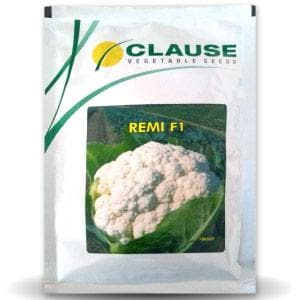 REMI CAULIFLOWER - BigHaat.com