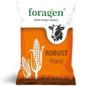 ROBUST CORN SEEDS - BigHaat.com