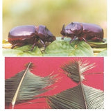 RHINOCEROS BEETLE LURE | Pest Control India - BigHaat.com