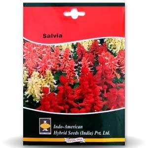 SALVIA - BigHaat.com