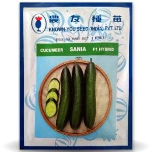 SANIA CUCUMBER - BigHaat.com