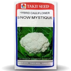SNOW MYSTIQUE CAULIFLOWER F1 - BigHaat.com