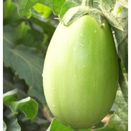 BRINJAL No. 1014 - BigHaat.com