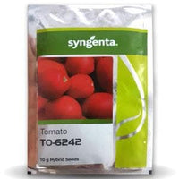 TO-6242 TOMATO - BigHaat.com