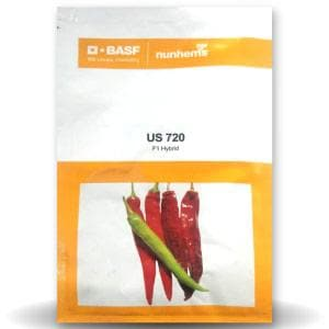 Buy Chilli Seeds Online India at BigHaat