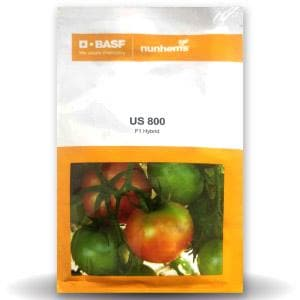 US 800 TOMATO - BigHaat.com