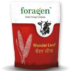 WONDER LEAF (MILLET MULTI-CUT)
