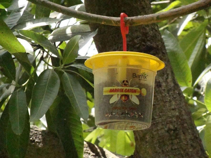 BARRIX CATCH FRUIT FLY LURE + TRAP - BigHaat.com