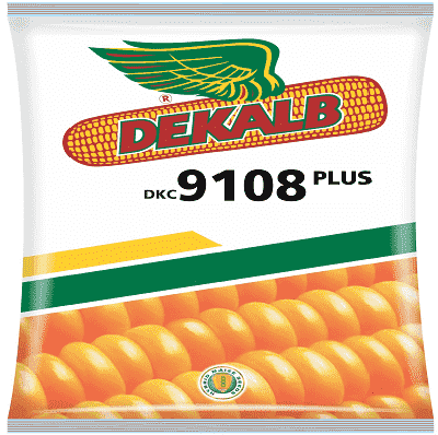 DEKALB 9108 PLUS CORN - BigHaat.com