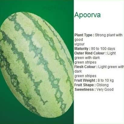 APOORVA WATERMELON - BigHaat.com