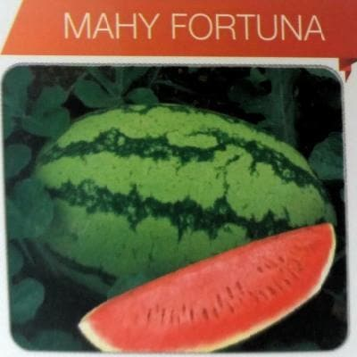 Fruit Seeds - FORTUNA (Watermelon)