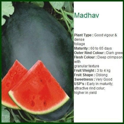 Fruit Seeds - MADHAV WATERMELON