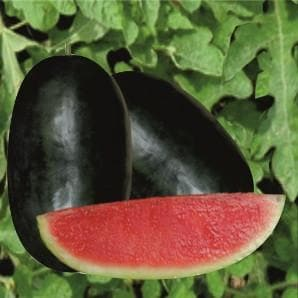 Fruit Seeds - MAHIMA WATERMELON
