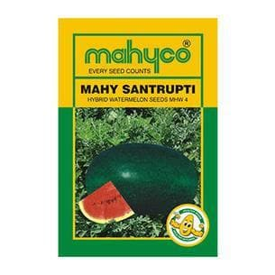 Fruit Seeds - MAHY SANTRUPTI